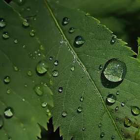 Damla Full HD by Ciddi Biri - Nature Up Close Trees & Bushes ( nature, tree, drop, green, brunch, leaf, rain )