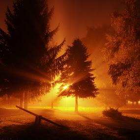 Mystic forest by Zoran Stanko - Landscapes Forests ( fog, forest, night, long exposure, landscape, zoran stanko, mist )