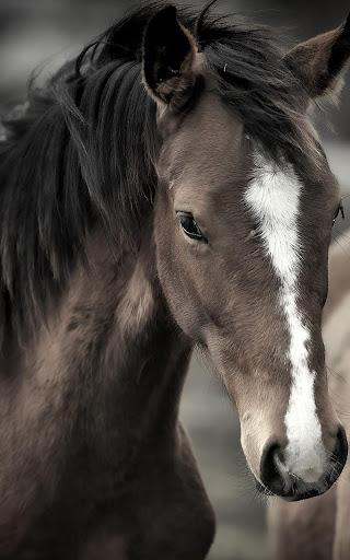 馬のライブ壁紙