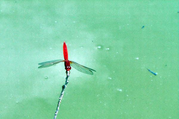 leggerezza sul lago di Nicca