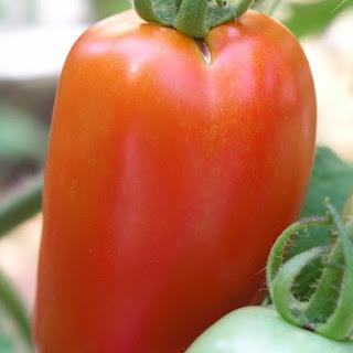 George's Quick Spicy Tomato Sauce