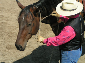 Photo: Run the loop between the hondo portion of the lariat, and the jowels of the horse.
