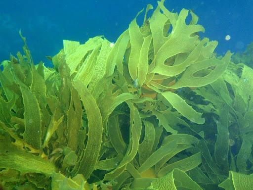 Seaweed Wallpapers HD FREE