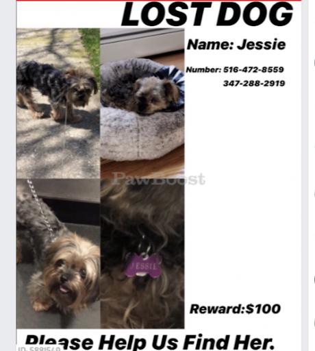 Jessie, MISSING Nov 16, 2019