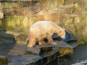 Photo: Knut wirft einen Blick in den Wassergraben...
