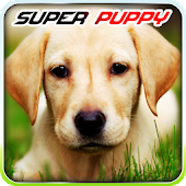Super puppy adoption 3D game