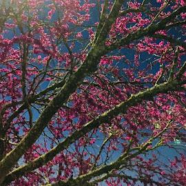 Morning beauty  by Ariel Macdonald - Nature Up Close Trees & Bushes