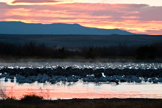 Photo: Sun rising at the Bosque. This pond is located on the east side of Route 1, three miles north of the Refuge entrance. This pond seems to be a congregating spot for snow geese from all over the Refuge. Small flocks flew in from time to time.