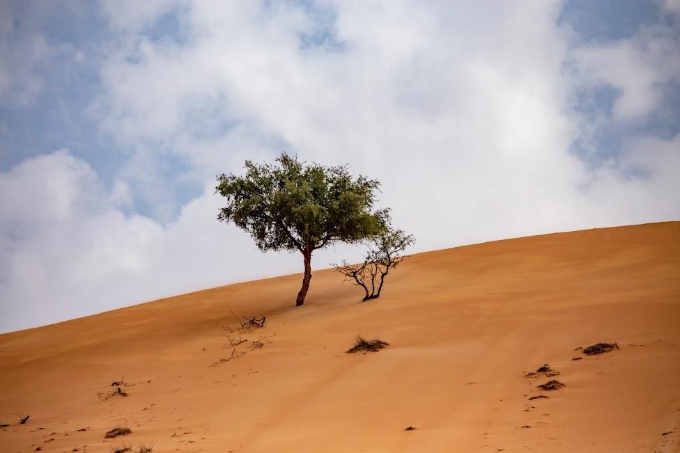 Sharqiya Sands, Oman, pustynia, drzewo, samotne drzewo