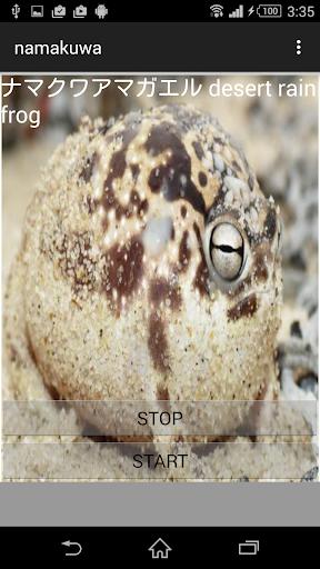カエル鳴き声ナマクアアマガエル