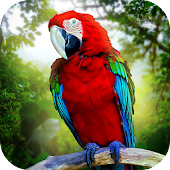 Jungle Parrot Simulator - try wild bird survival!