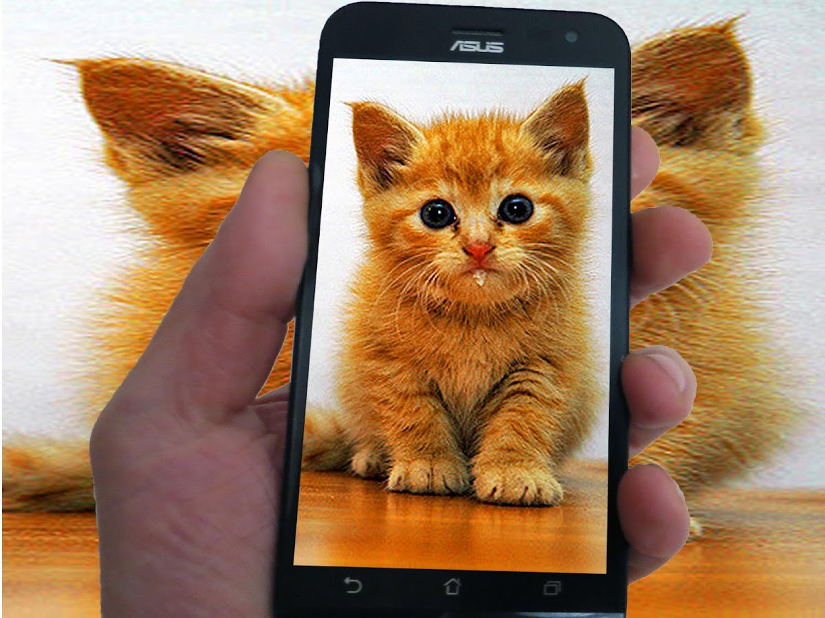 Baby Kittens HD Wallpapers Android Apps on Google Play