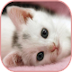 Download Cute Cat stickers for chat WAStickerApps For PC Windows and Mac