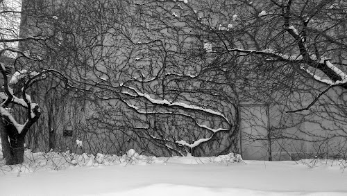 abstract pattern of tree branches hugging a wall with a door on far right