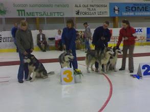 Photo: BIS-3 kasvari Somerolla 2007 Heta, Ylkä, Ohto ja Hilu
