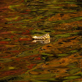 Lone Leaf by Val Ewing - Nature Up Close Leaves & Grasses ( water, pwcfallleaves, jersey valley, lake, leaves )
