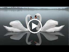 Video: Antonio Vivaldi  Tito Manlio (RV 738-A) - II IX Arietta  Dar la morte a te, mia vita -