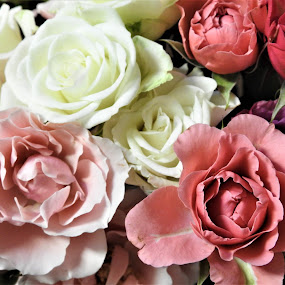 Rose bouquet by Carol Leynard - Flowers Flower Arangements ( pink rose, rose petals, white rose, bouquet, roses,  )