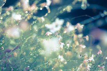 梅雨に入る前に傘をぶんぶん振っていないかを確認してほしい。映画「雨の日は会えない、晴れた日は君を想う」