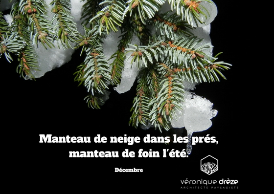 Manteau de neige dans les pr s manteau de foin l 39 t for Amenagement jardin wepion