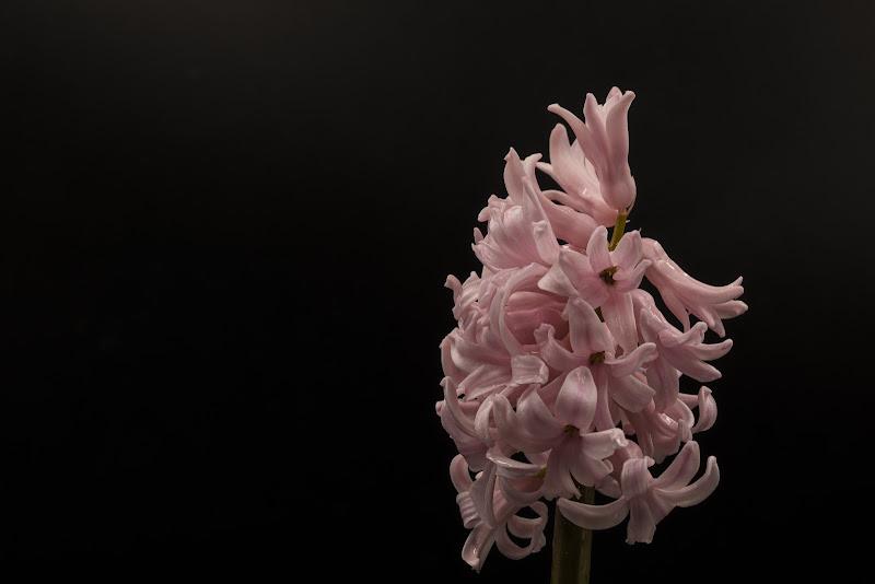 Natura in Rosa di FilippoColombo