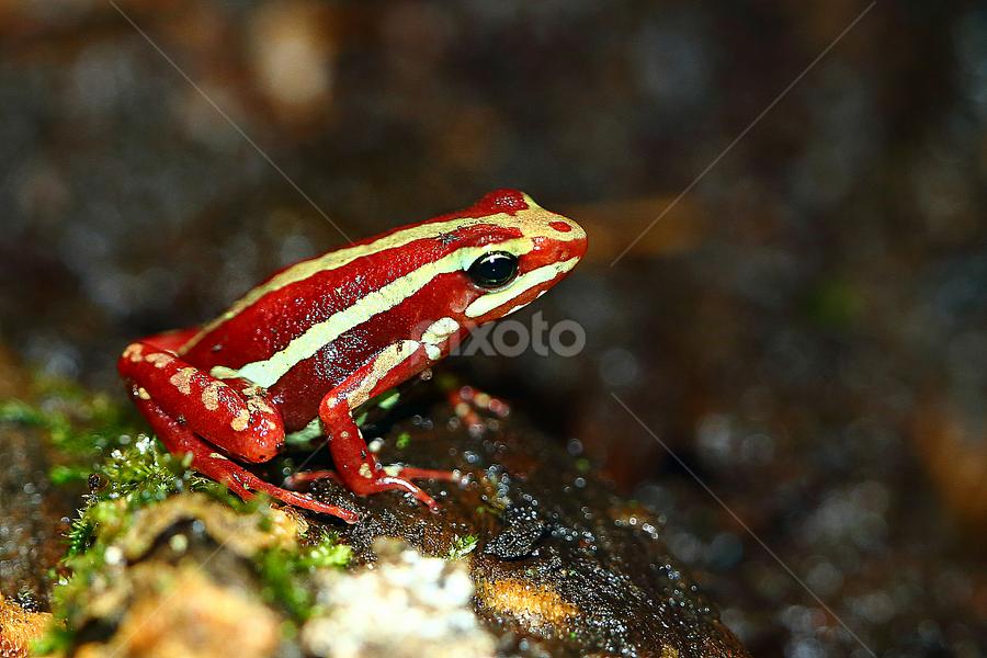 Epidobate perchée by Gérard CHATENET - Animals Amphibians