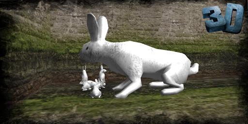 Life of Rabbit