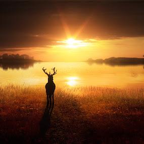 Dawn's Golden Light by Jennifer Woodward - Digital Art Places ( water, animals, dawn, nature, sunset, wildlife, scenery, sunrise, landscape, stag, dusk, deer )