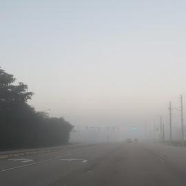 Foggy Morning Commute by Jill Nightingale - Transportation Roads ( visibility, street, red light, road, travel, morning, green light, foggy, winter, fog, reduced, drive, commute, empty, traffic light,  )