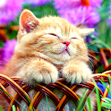Cat Live Wallpapers icon