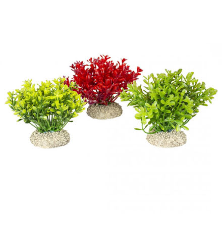 Plant glosso S mixade färger 9 cm