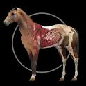 Horse Anatomy: Equine 3D icon