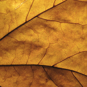 2014-10-28 leaf 030.JPG