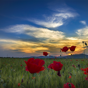Red in the west by Adrian Urbanek - Flowers Flowers in the Wild