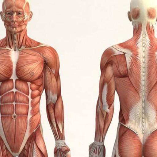 Baixar Aprenda anatomia humana grátis. para Android