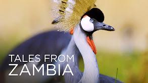 Tales From Zambia thumbnail