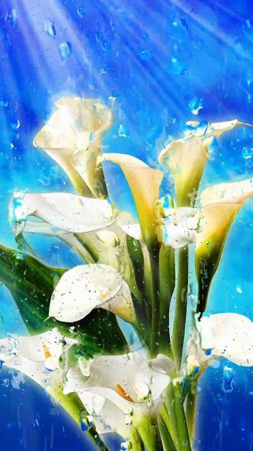Summer Rain, Flowers, HD LWP- screenshot