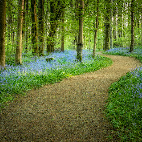 Portglenone Forest by Wojciech  Golebiewski - Nature Up Close Trees & Bushes ( path, flowers, forest, beauty, natural, nature, nature beauty, bluebells, park, nature photography )