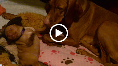 Video: A little playtime with Momma
