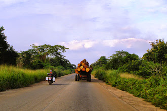 Photo: Beware of the huge logs!!