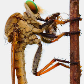 by B Iwan Wijanarko - Animals Insects & Spiders