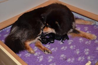Photo: Nu er klokken 4 om natten, vi har lige skiftet tæppe, fordi jeg troede hun var færdig.