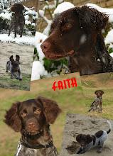 Photo: collage FAITH