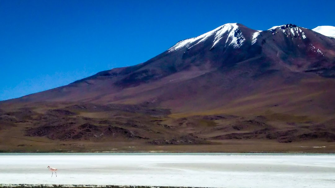 watching a solitary flamingo walk by in front of a mountain in the atacama desert in Bolivia