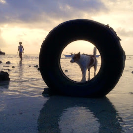 Lee Framed...., by Dickson   Shia - Animals - Dogs Playing ( seascape, framed, sunset, beach )
