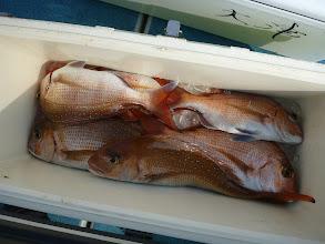 Photo: タムラさんも好調! 飲み込みの真鯛ですでに6~7匹!