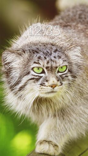 Wild Cat Wall Lock