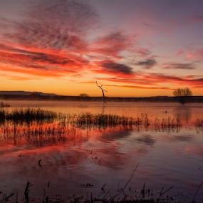 by Heather Diamond - Landscapes Sunsets & Sunrises ( bosque del apache, orange, nature, beautiful, scenic, glowing, scenery, sunrise, landscape, natural, new mexico )
