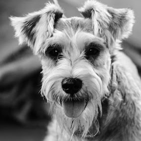CUTE DOGY by Frans Priyo - Animals - Dogs Portraits