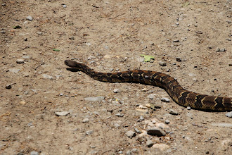 Photo: We stopped to observe a snake on the Forest Service Road near the trailhead